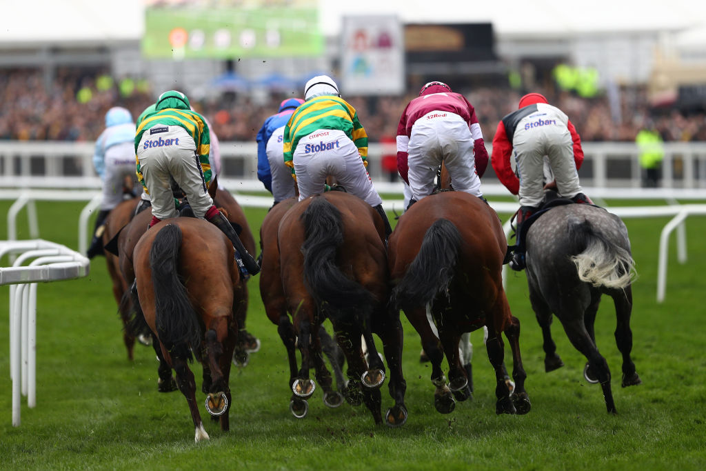 Horse Racing Live Streaming