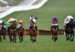 Champion Hurdle live streaming